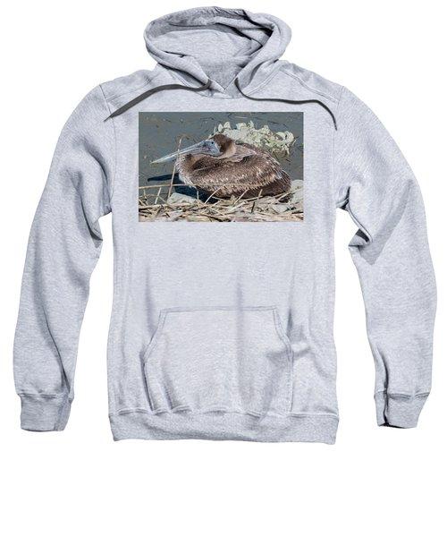 Brown Pelican 3 March 2018 Sweatshirt