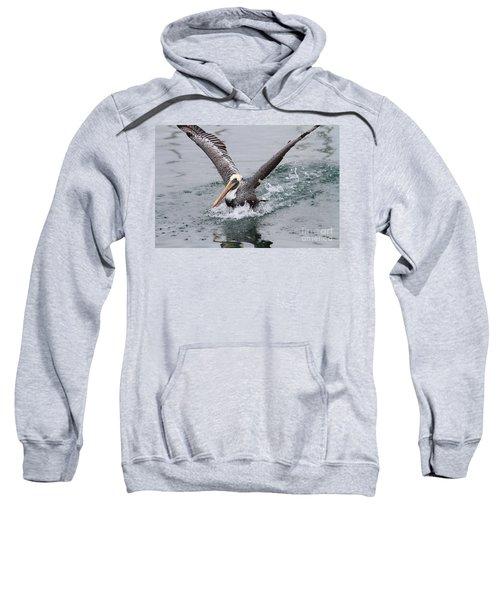 Brown Pelican Landing On Water . 7d8372 Sweatshirt