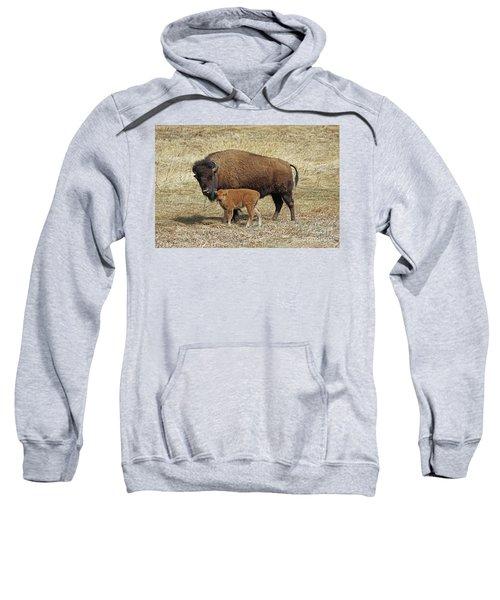 Buffalo With Newborn Calf Sweatshirt