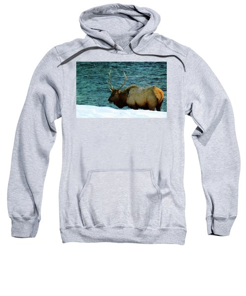 Bull Elk In Winter Sweatshirt