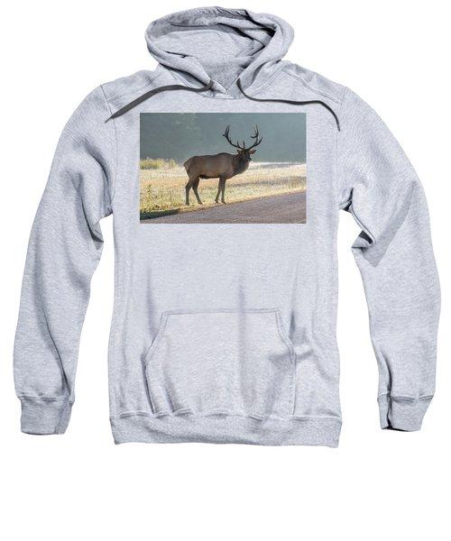 Bull Elk Watching Sweatshirt