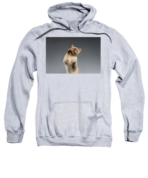 Burma Cat Paws Snout Covers On Gray Sweatshirt