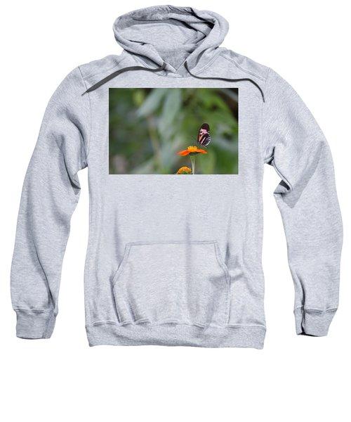 Butterfly 16 Sweatshirt