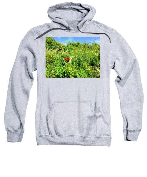 Butterfly Bonanza Sweatshirt