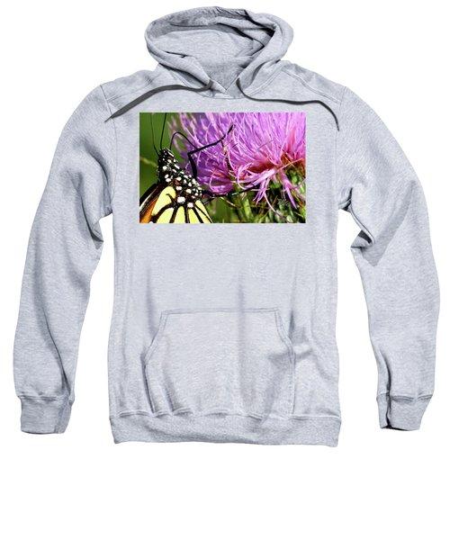 Butterfly On Bull Thistle Sweatshirt