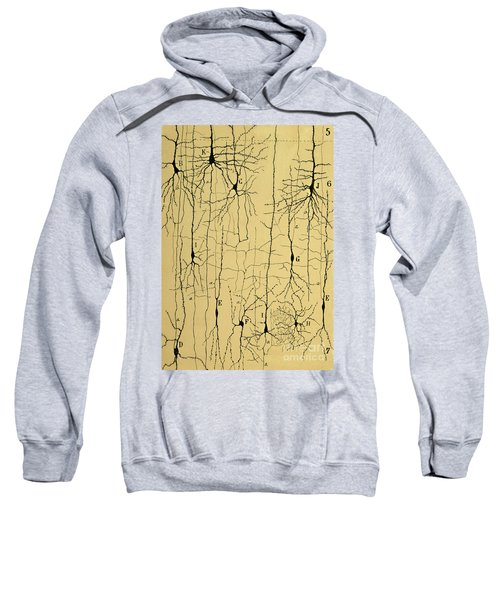 Cajal Drawing Of Microscopic Structure Of The Brain 1904 Sweatshirt