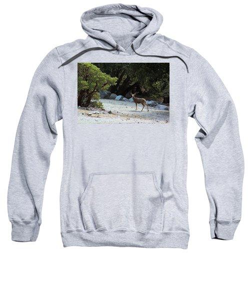 California Mule Deer Sweatshirt
