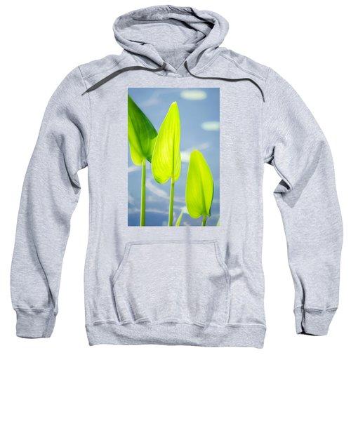 Calm Greens Sweatshirt