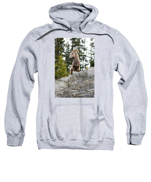 Canadian Bighorn Side Profile Sweatshirt