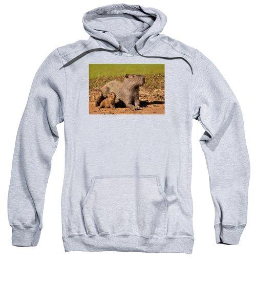 Capybara Family Enjoying Sunset Sweatshirt