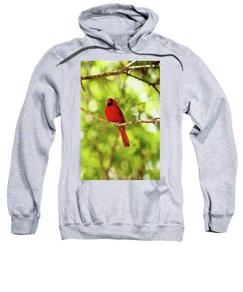 Cardinal Stare Sweatshirt