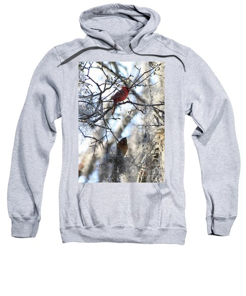 Cardinals In Mossy Tree Sweatshirt
