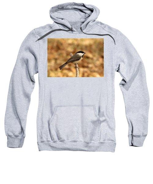 Carolina Chickadee On Branch Sweatshirt
