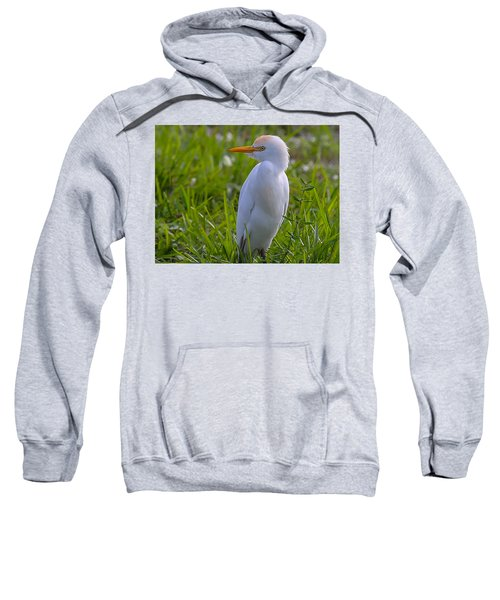 Cattle Egret Sweatshirt