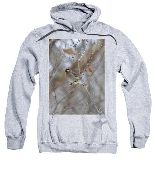 Cedar Wax Wing 2 Sweatshirt by David Arment