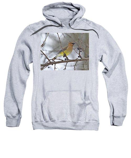 Cedar Wax Wing-2 Sweatshirt by Robert Pearson