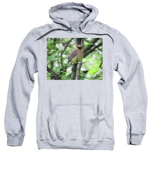 Cedar Wax Wing Sweatshirt by Alison Gimpel