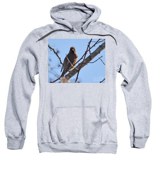 Cedar Wax Wing On The Lookout Sweatshirt