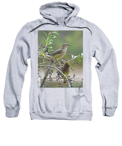 Cedar Wax Wings Sweatshirt
