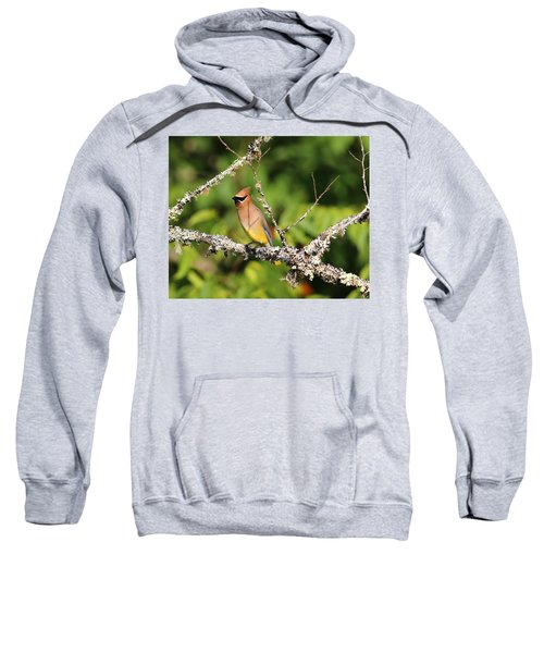 Cedar Waxwing  Sweatshirt by Carol R Montoya