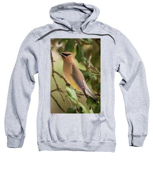 Cedar Waxwing Portrait Sweatshirt
