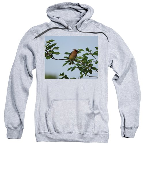 Cedar Waxwing Profile Sweatshirt