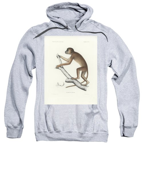 Sweatshirt featuring the drawing Central Yellow Baboon, Papio C. Cynocephalus by J D L Franz Wagner