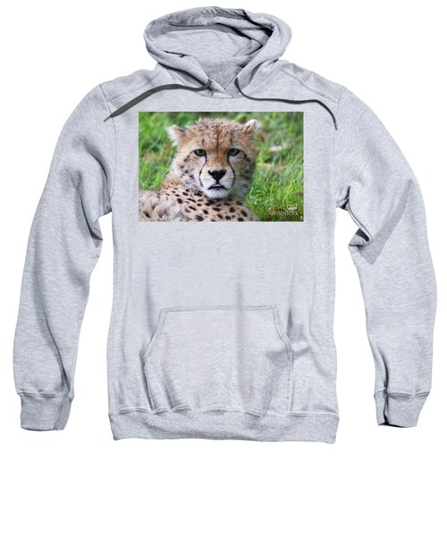 Sweatshirt featuring the photograph Cheetah by MGL Meiklejohn Graphics Licensing