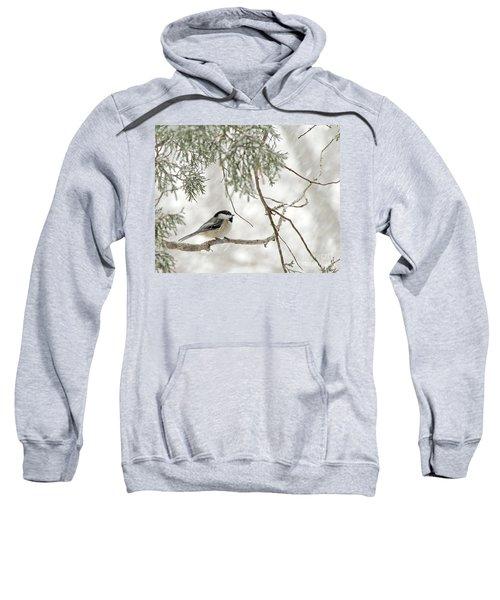 Chicadee In A Snow Storm  Sweatshirt