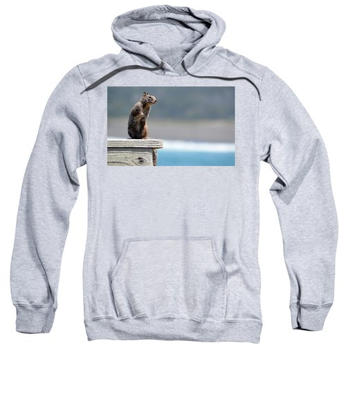 Chilly Squirrel Sweatshirt