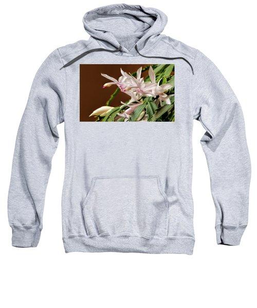 Christmas Cactus Sweatshirt