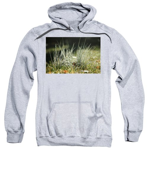 Close-up Of Dew On Grass, In A Sunny, Humid Autumn Morning Sweatshirt