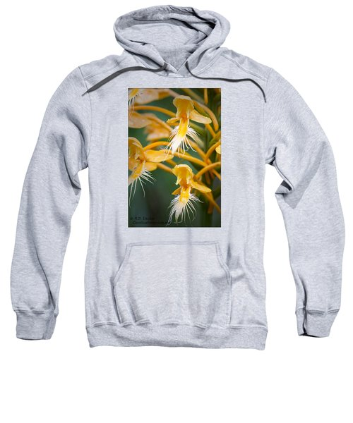 Close-up Of Yellow Fringed Orchid Sweatshirt