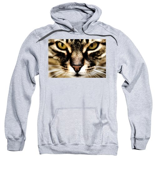 Close Up Shot Of A Cat Sweatshirt