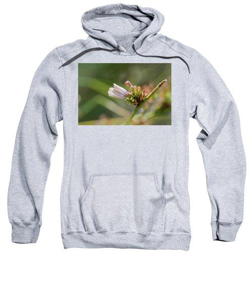 Closed Flower Of Cichorium Intybus Or Chicory Sweatshirt