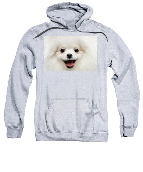 Closeup Furry Happiness White Pomeranian Spitz Dog Curious Smiling Sweatshirt