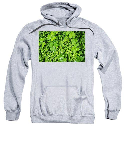Lush Green Soothing Organic Sense Sweatshirt