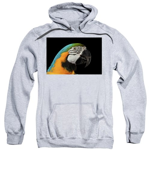 Closeup Portrait Of A Blue And Yellow Macaw Parrot Face Isolated On Black Background Sweatshirt