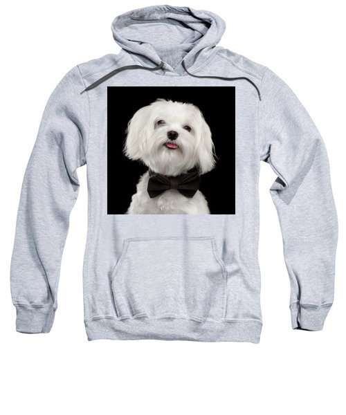 Closeup Portrait Of Happy White Maltese Dog With Bow Looking In Camera Isolated On Black Background Sweatshirt