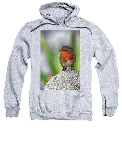 Cocky Robin Sweatshirt