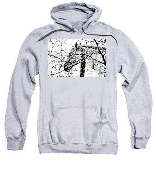 Cold Horse Sweatshirt