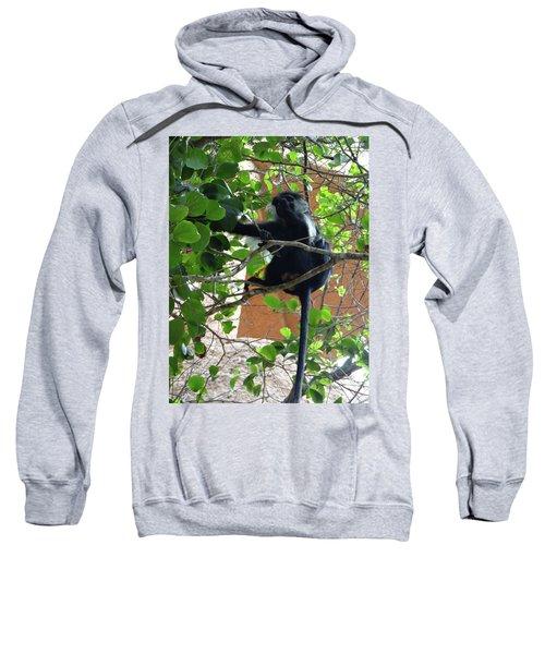 Colobus Monkey Eating Leaves In A Tree - Full Body Sweatshirt