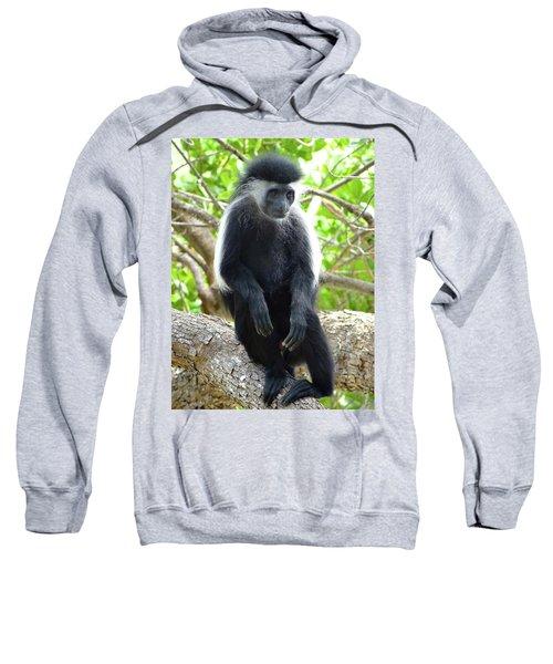 Colobus Monkey Sitting In A Tree 2 Sweatshirt