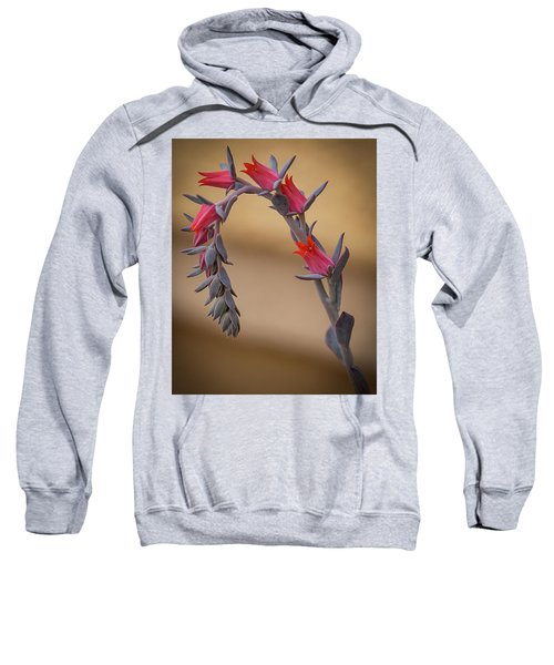 Color And Curve Sweatshirt