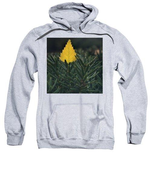 Chilled Sweatshirt