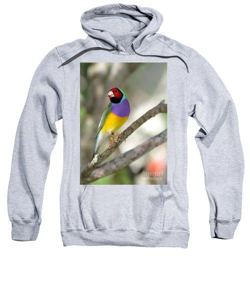 Colorful Gouldian Finch Sweatshirt