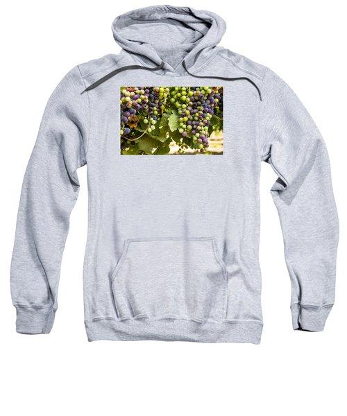 Colorful Red Wine Grape Sweatshirt