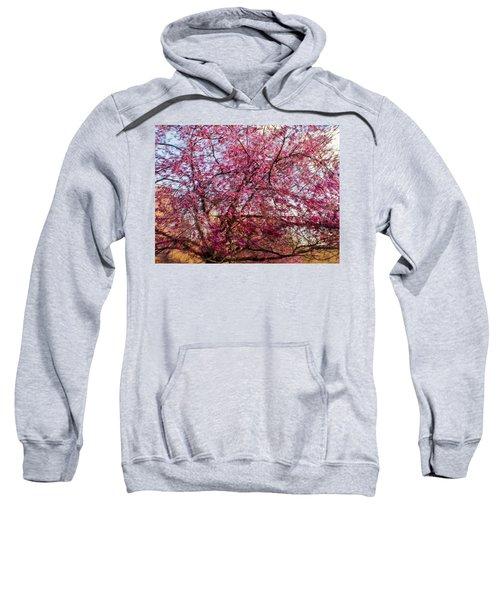 Columnar Sargent Cherry 1 Sweatshirt