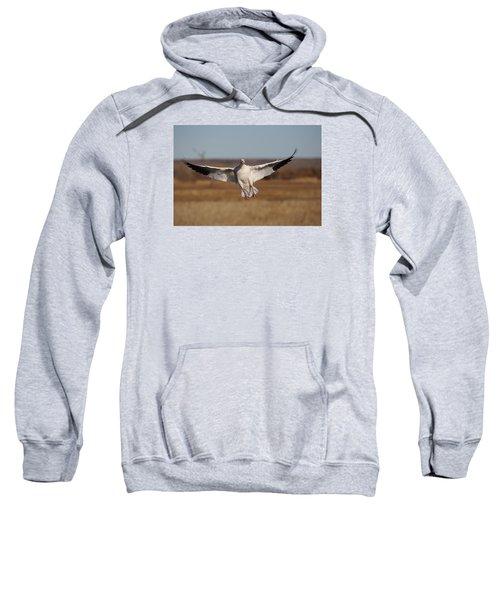 Coming In  Sweatshirt