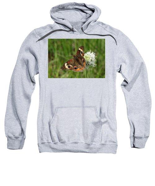 Common Buckeye Butterfly On Wildflower Sweatshirt